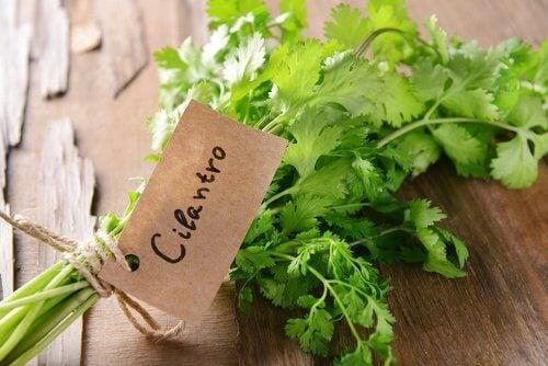 7 stærke sundhedsfordele ved koriander