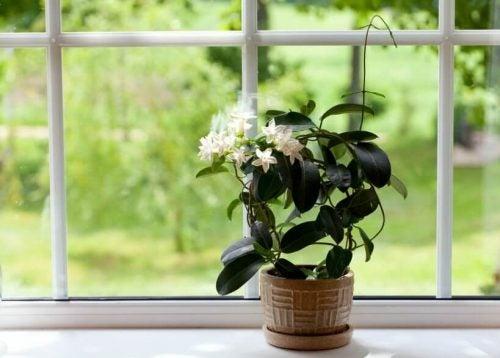 Blomst i et vindue - desinficere dit sovevaerelse