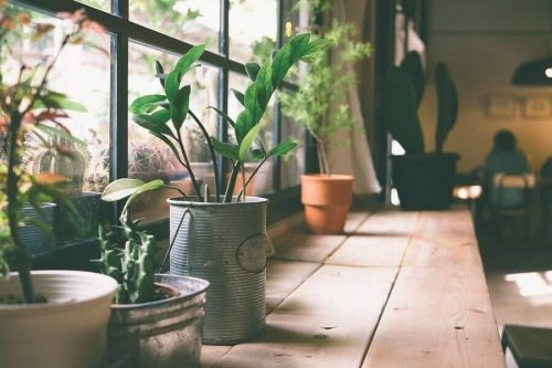 Gammeldags urtepotte lavet af en daase