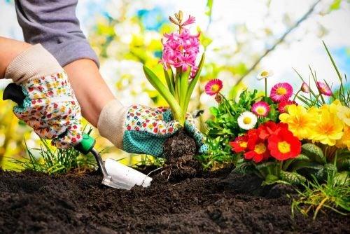 Kvinde der planter blomster