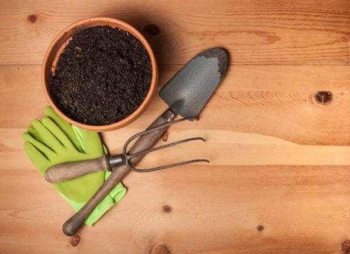 Planter du nemt kan gro i din have, gør bare noget ved dit hjem. Det bliver mere indbydende og hyggeligt, og planterne skaber en frisk og rar atmosfære.