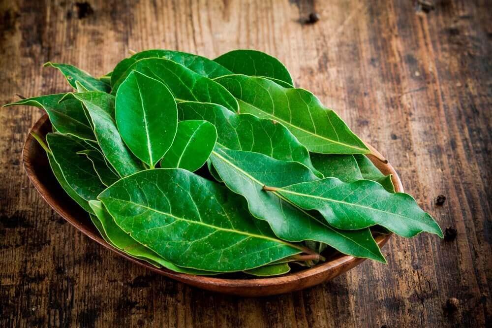 Laurbærblade som slimløsende naturlægemiddel