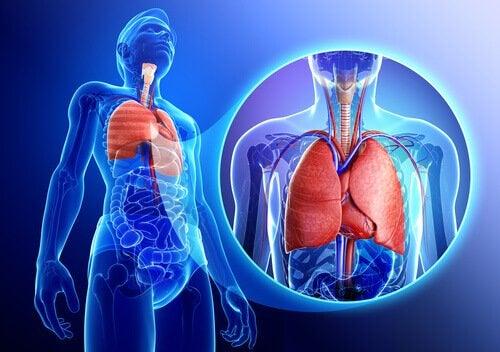 Lungerne