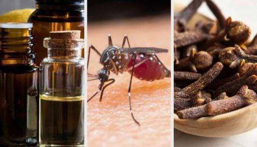 9 aromaer der hjælper med at bekæmpe og dræbe myg