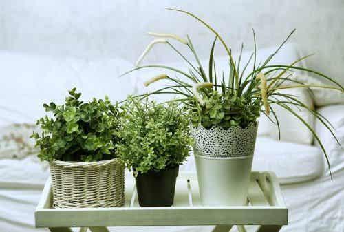 Eddike mod mel- og bladlus på planter