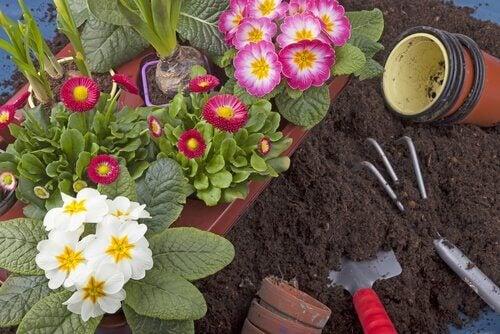 10 planter du nemt kan gro i din egen have