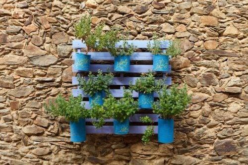 Potteplanter lavet af daaser