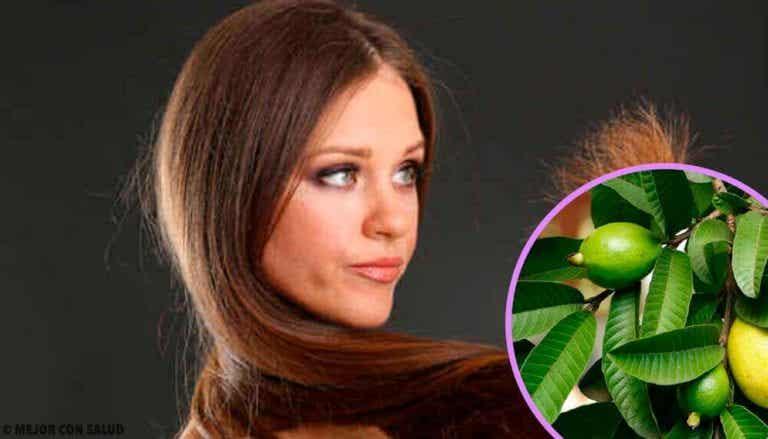 Guavablade mod beskadiget hår