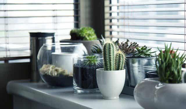 5 metoder til at plante en kaktus
