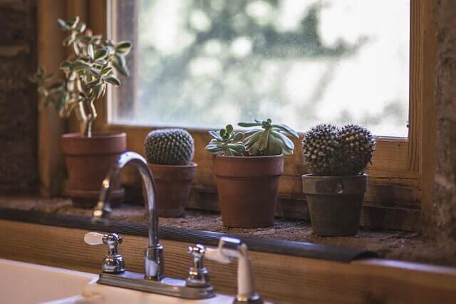 Kaktusser i vindueskarmen.
