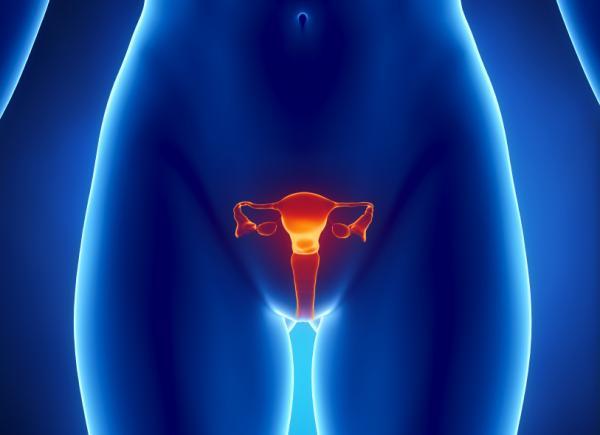 Menstruationen.