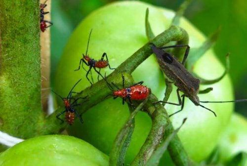 5 giftstoffer til at udrydde skadedyr