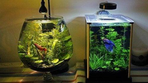 Den bedste måde at rense et akvarium