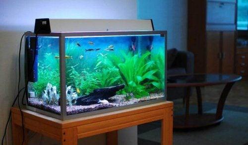 Akvarium med fisk