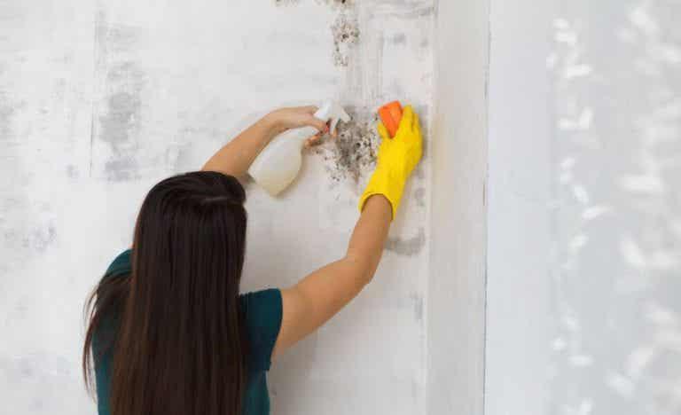 Sådan kan du fjerne skimmelsvamp fra dit hjem