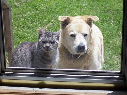 Hund sammen med kat.