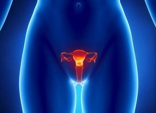 Hvordan kan du opdage æggestokkræft tidligt?