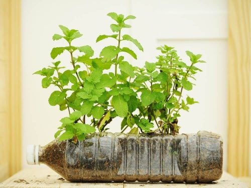 Plastikflaske potteplante