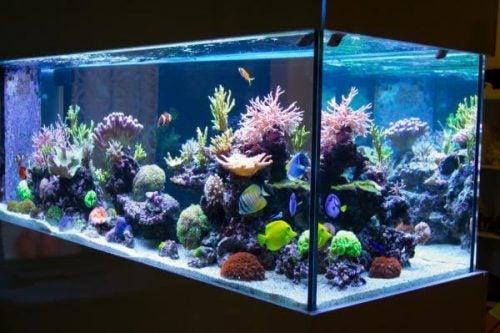 Stort favierigt akvarie