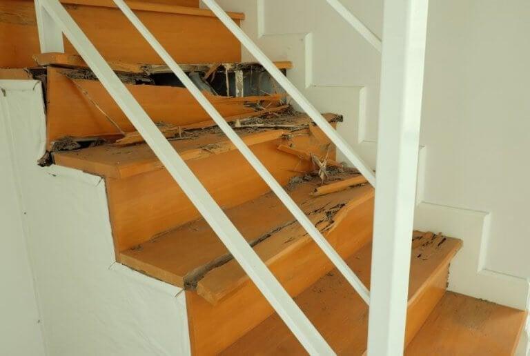 Sådan fjerner du termitter fra dit hjem