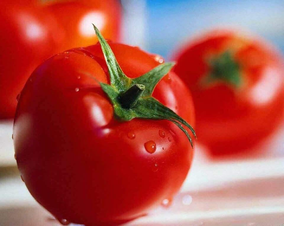 Friske røde tomater.