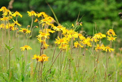 Blomster på en eng.