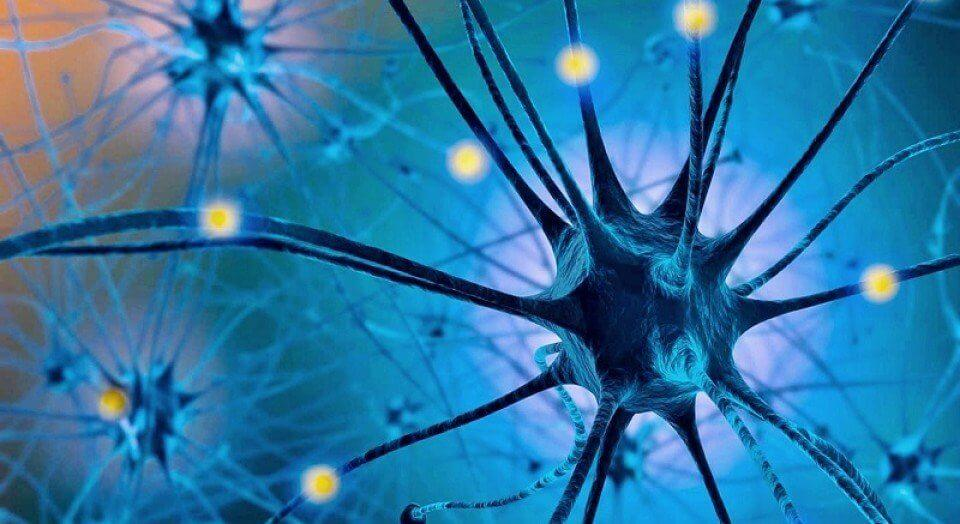 tryptofan omdannes til serotonin