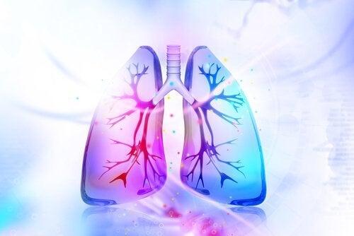 Prøv disse naturlige midler til at detoxe dine lunger