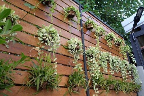 Lav din almindelige væg om til en lodret have