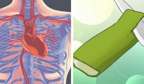 Aloe vera styrker hjertet: 5 gode fordele