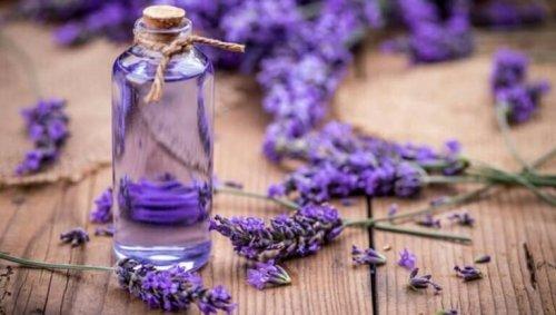 Lavendel er det mest populære middel mod lopper og flåter
