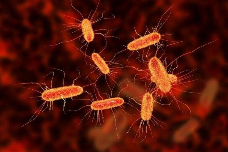 Kurér mave-tarminfektioner med tre naturlægemidler