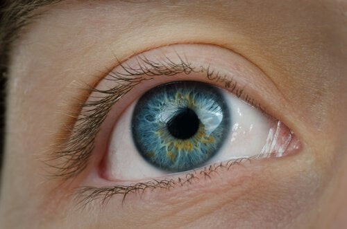 fordele ved blåbær er sunde øjne