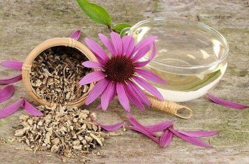 Echinea har anti-inflammatoriske egenskaber