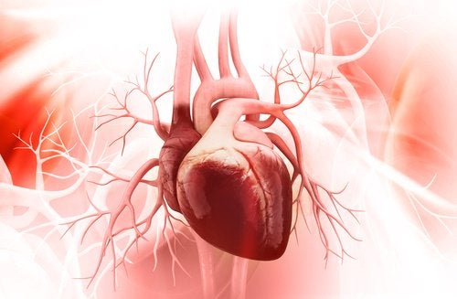 Vandmelonkerner kan også fremme kardiovaskulær sundhed