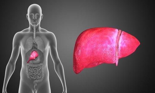 Gurkemeje er op i gennem historien blevet brugt til at behandle leverproblemer