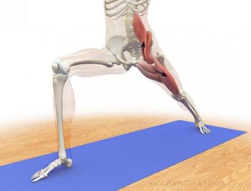 Træning af psoas major er en vigtig del af mange yogaøvelser