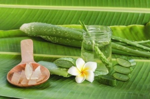 Sunde egenskaber ved aloe vera