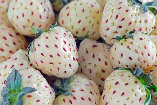 Ananasjordbær er et kryds mellem to sorter jordbær