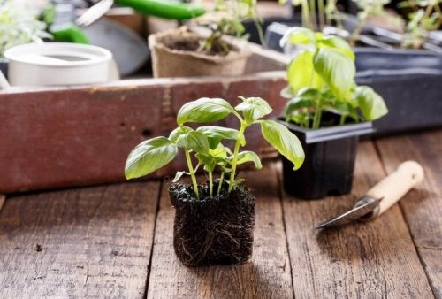 At have planter i dit hjælp kan hjælpe til at rense luften og give et forbedret indeklima