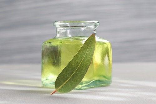 Eukalyptusolie kan hjælpe i behandlingen af luftvejssygdomme