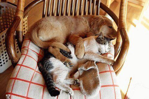 Kæledyr elsker at have deres eget rum, og du kan lave et kæledyrshjem af genanvendte materialer