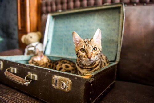 Du kan lave en seng til dit kæledyr ud af en gammel kuffert