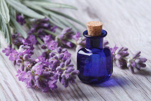 Lavendelolie kan anvendes til meget