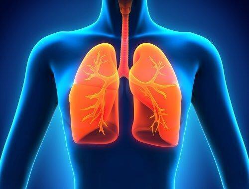 Resveratrol kan beskytte dine lunger