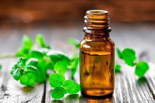 Mintolie har antioxidante egenskaber