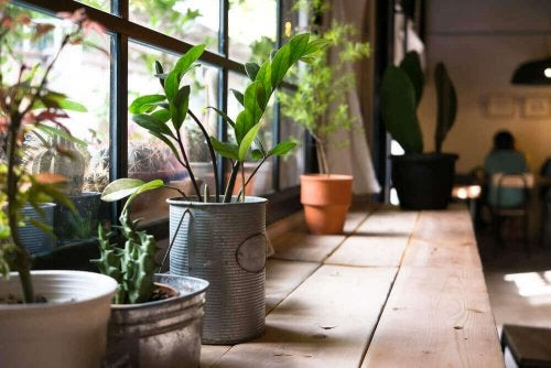 Der er mange fordele ved planter i hjemmet, især for din sundhed