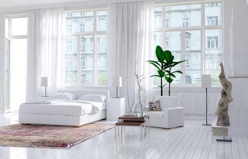 Stueplanter kan reducere støv i hjemmet med op til 20%. Dette er en af de mange fordele ved panter i hjemmet