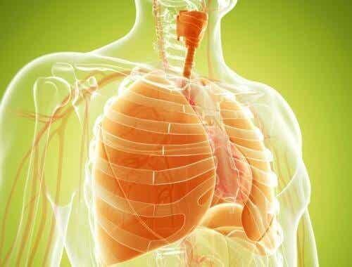 Naturlige midler til at afgifte dine lunger