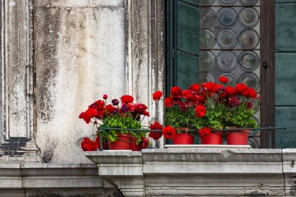 De fem bedste blomster til altanen